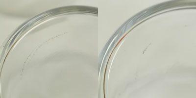 ボデガグラス/200ml