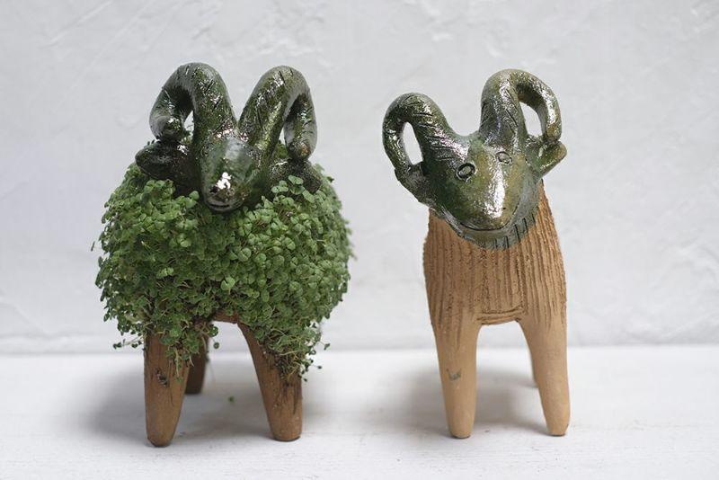 チアシードを育てる羊